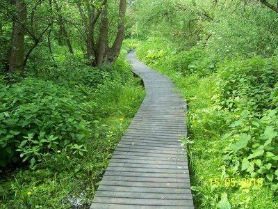 Donkey Wood raised walkway.JPG