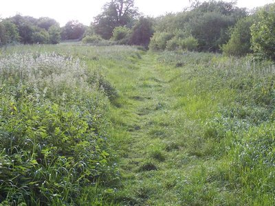 Ten acres and Gutteridge wood 3.JPG