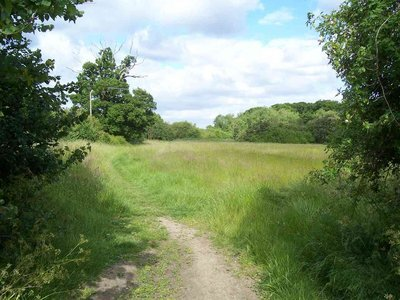 Ten acres and Gutteridge wood 7.JPG