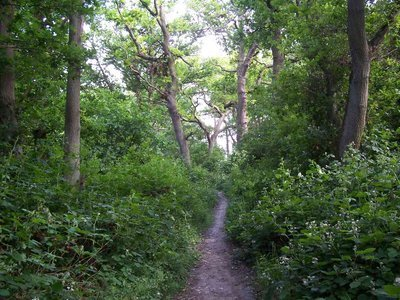 Ten acres and Gutteridge wood 10.JPG