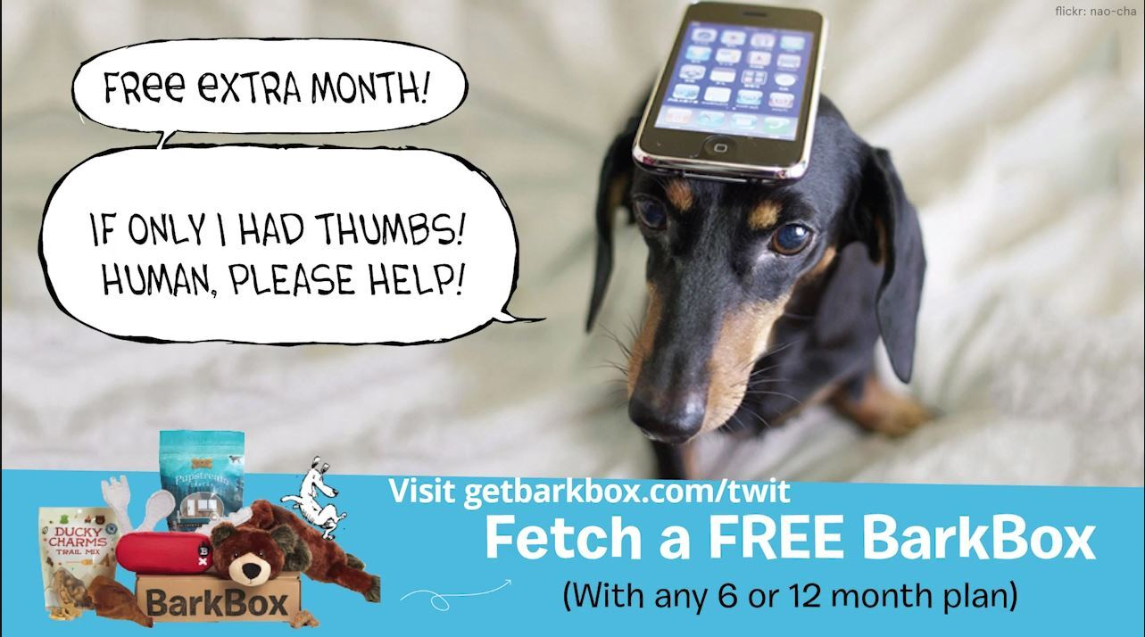 Get a Bark Box for your dog.JPG