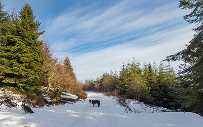 Snowy Brechfa Forest walks-11.jpg