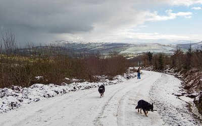 Snowy Brechfa Forest walks-30.jpg