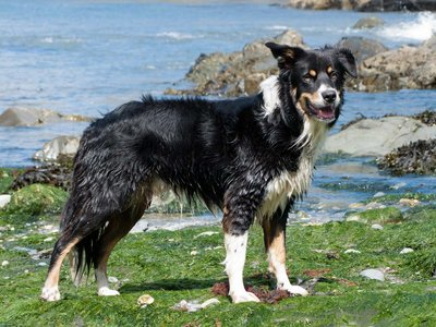 Gunnar at Trefin cove.jpg