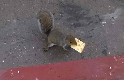 squirrel with cream cracker.jpg